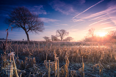 The Allure of Winter (SimonTHGolfer) Tags: winter seasons landscape field frost tree sky dawn sunrise suffolk eastanglia nature nikon simontalbothurnphotography hdr wow