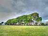 Holm Oaks (Rob_Pennycook) Tags: tree oak holmoak quercus southsea hampshire photomatix