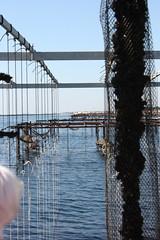 * (Anduze traveller) Tags: france languedocroussillon hrault etangdethau bouzigues musselfarming