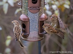 One Morning At The Feeder (jimgspokane) Tags: birds washingtonstate wildlife birdfeeders excapture