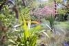 _MG_3609 (TobiasW.) Tags: spring frühling fruehling garden gardenflowers gartenblumen gärten garten blue mountains nsw australien australia backyard public