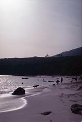 Praia do Coelho, Arrbida, Outubro 2014 (Tefilo de Sales) Tags: analog analogic beach praia sand water sea atlantic mpa marine protected area nikkormatel nikkormat nikon nikkor 50mm 35mm film fuji fujifilm fujixtra400 expired arrabida do coelho