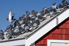 Waiting for the Storm (PAJ880) Tags: macmillan wharf shacks birds pigeons storm provincetown ma new england ne massachusetts cape cod lower