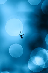 (Moataz Al-Hussaini) Tags: spider bokeh canon silhouette spiders insect insects light blue photography photographer web spiderweb lights