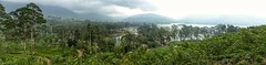 Last heaven on Earth (schneider_sebastien) Tags: maskelia srilanka teaplantation asie asia lumix panasonic tz20 panorama adamspick paysage nature landscape lanka ceylan