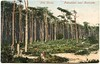 Pine Woods, Pokesdown, Bournemouth, Dorset (Alwyn Ladell) Tags: dorset bournemouth pokesdown boscombe pinewoods