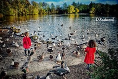 Two gifts (debbyeastwood) Tags: england water life princess ducks pond nature red love granddaughters
