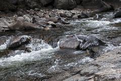 Ice Caps (Jeff Mitton) Tags: bouldercreek bouldercanyon water creek stream colorado earthnaturelife wondersofnature