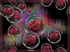 No longer Baffled by Bubbles (Simply Sharn ~ on again off again) Tags: roses framed bubbles funhousefilters
