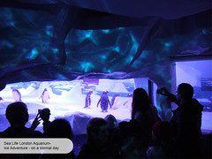 London Aquarium Ice Adventure penguin crowd (ravenhill design) Tags: design immersive interactive bas londonaquarium happycampers spidercrab ravenhill researchstation gentoopenguins britishantarcticsurvey iceadventure crawlthrough ravenhilldesign