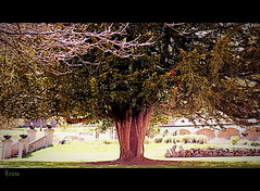 Just a big old tree in the park.......but I love it!! (Patricia Speck) Tags: park tree grass sunshine wall branches steps bark seats trunk tricia justabigoldtreeintheparkandiloveit patriciaspeck