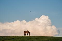 kiss the ground (nardell) Tags: sunset sky horses horse bird nature animals clouds farm cloudporn grazing ridleycreekstatepark mediapa lonebird hiddenvalleyhorsefarm