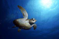 2012 12 METTRA OCEAN INDIEN 5469
