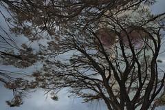 her name is winter DSCF1896p 1080 (Max Metz) Tags: city winter light urban max art psp paintshop photo fuji mask photos spirit low ghost fringe spirits photograph ethereal handheld pro fujifilm mystical ghosts 1855mm 1855 myth mystic metz ether metaphysical x5 metaphysic xe1 pasm psam xtrans fujixe1 fuji1855mm