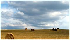 (LILI 296...) Tags: france champs ciel été nuage botte foin paille champagneardenne canonpowershotg12
