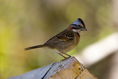 Campos_046@20130804.jpg (Br@hl) Tags: nature birds brasil canon outdoors 7d 2013 brhl canon7d brunoahlgrimm
