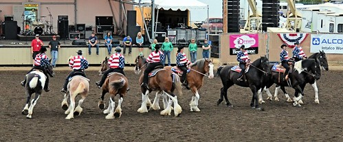 Draft Horse Drill Team
