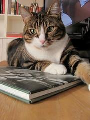 Vincent reading a book (Per Ola Wiberg ~ powi) Tags: cats sweden stockholm vincent 2013 hellopussycat