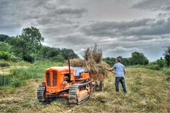 HAY MAKING  TUSCANY (TT  FAUGHAN) Tags: old orange man grass track farmers farming working machine headlights jeans mature tuscany strong agriculture pitchfork tractors haymaking toolbox fordson in