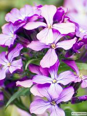 DSC_3910 (Roelofs fotografie) Tags: flowers flower holland color green nature happy cozy spring nikon groen nederland natuur bloemen wilfred gezellig bloem kleur kleuren voorjaar neterlands d3200 roelofs