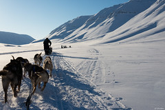 Svalbard - Traneau (jf garbez) Tags: people dog chien snow norway landscape person norge nikon europa europe svalbard neige nikkor paysage personne spitsbergen sledge nationalgeographic longyearbyen norvge d600 domesticanimal 24120mm spitzberg traneau nikond600 animaldomestique nikonpassion bolterdalen nikkor2401200mmf4