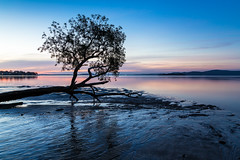 Tanilba Bay after sunset (dean.white) Tags: australia newsouthwales nsw portstephens tilligerrypeninsula tanilbabay bay sunset tree canonef24105mmf4lisusm sandflats canoneos6d