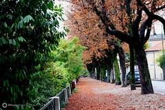 Gino_Mariasole_09