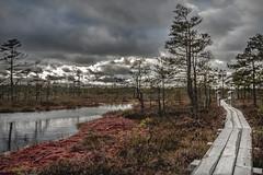 Purva preja / Swamp transition (Andis Svare) Tags: swamp transition