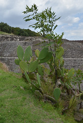 DSC_7780p (Milan Tvrd) Tags: cholula mxico puebla pyramide zonaarqueolgica
