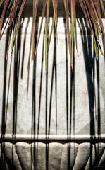 I_segni_della_luce (Danilo Mazzanti) Tags: danilo danilomazzanti mazzanti wwwdanilomazzantiit fotografia foto fotografo photos photography luce vaso pianta ombre marmo linee