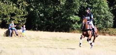 2016  SGW (Steenvoorde Leen - 2.1 ml views) Tags: 2016 doorn utrechtseheuvelrug manege den toom arreche sgw dressuur cross dressage springen jumping hindernis fenche hrdle obstacle schranke dressieren horseriding horse pferde pferd cheval cheveaux horses reiten sgw2016