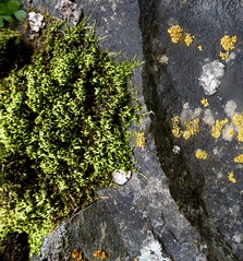 A Spring Hike on the Klickitat Trail (rooftop65) Tags: klickitattrail hike spring washington rockface colorandtexture lichen moss