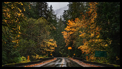 IMG_5847-Edit-Edit (bluecameraguy) Tags: canada canon5d canon 5d classic 5dc landscape vancouverisland bc cathedral grove fall