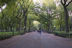 Autumn Beginnings - NYC Central Park (frankiefotocpa) Tags: nyc newyork newyorkcity fall autumn foliage park urban citypark city centralpark colors beautiful capture nikon digitalphotography trees travel