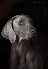 odie (silversaltphoto) Tags: silversaltphoto senosiain studio sadows sombras perro dog nikon navarra d800