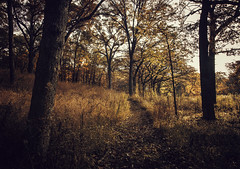 Autumn Falls (Anthonypresley1) Tags: autumn fall falls morning nature landscape tree trees leaf leaves grass sepia old retro vintage anthony presley anthonypresley illinois