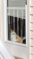 I'm waiting (xzna) Tags: cat waiting watching