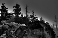 Foggy Mountain (Tom Mortenson) Tags: clingmansdome bw monochrome smokies mountain greatsmokymountains nationalpark digital foggy mysterious rocks boulders canon canon6d canoneos 24105l usa america northamerica nature trees ghostly gatlinburg tennessee geotagged nationalparkservice natural geology