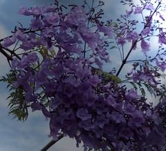 La Palma 24 (megegj)) Tags: gert bloem flower