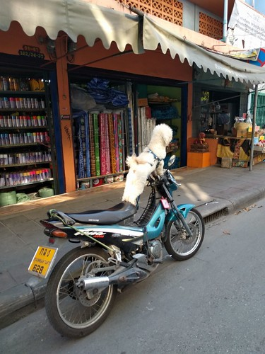Biker dude dog #1  - Bangkok, Thailand (ashabot) Tags: inexplicable dolls strange streetscenes odd blue thailand thai bangkok street peculiar funny curious quirky interesting bizarre unusual weird