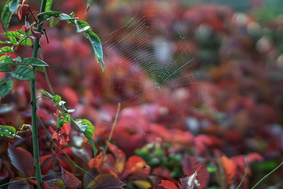 Autumn web...