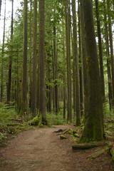 Buntzen Lake Trip 41 (SierraSunrise) Tags: bc britishcolumbia canada buntzenlake parks lowermainland trail forest moss trees hiking