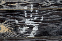 Hello (shutterbusterbob) Tags: handprint hand paint board righthand right barnboard northernstatedairyfarm northernstaterecreationalarea sedrowoolley skagitcounty skagitvalley skagit sedro woolley wood white woodgrain canon canoneos canoneos70d canon70d eos eos70d eoscanon 70d