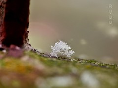 first snow (Ola 竜) Tags: firstsnow snow white snowflakes icecrystals snowy flakes snowflake macro winter closeup bokeh dof focus rust rail green moss ground lowpov cold perspective