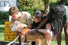 SHOWing some canine love (William & Mary Photos) Tags: williamsburg va usa williamandmary wm williammary wandm collegeofwilliamandmary collegeofwilliammary community service volunteer
