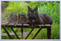 SAM_2429 (Valentina_T) Tags: cat postcrossing postcard