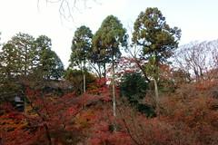 DSC02765 (MrSUIZOU) Tags: 京都 紅葉 北野天満宮 平野神社 十月桜