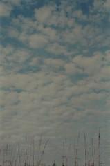 33840005 (schaaf.amanda) Tags: sky clouds vast beach reeds vertical landscape 35mm film analog