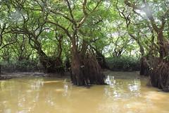 swamp view () Tags:      nikon nikond5300 swampforest  ratargul sylhet bangladesh