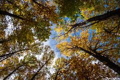 El corazn del bosque (cvielba) Tags: otoo avila castaar eltiemblo